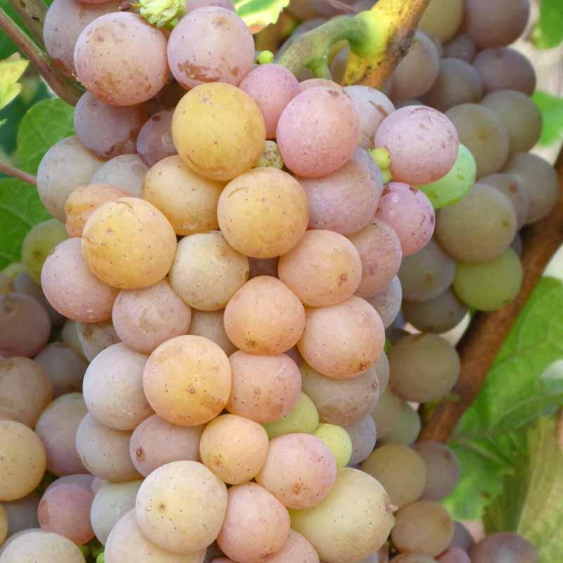 l'équilibré jus de raisin pétillant à Nantes